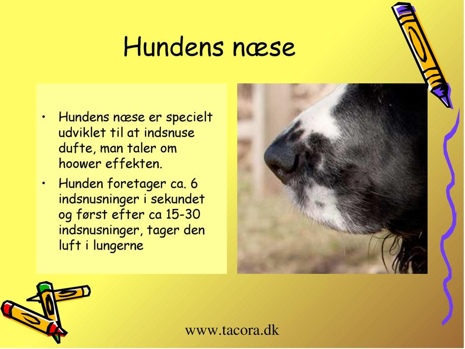 Hunden foretager ca.
