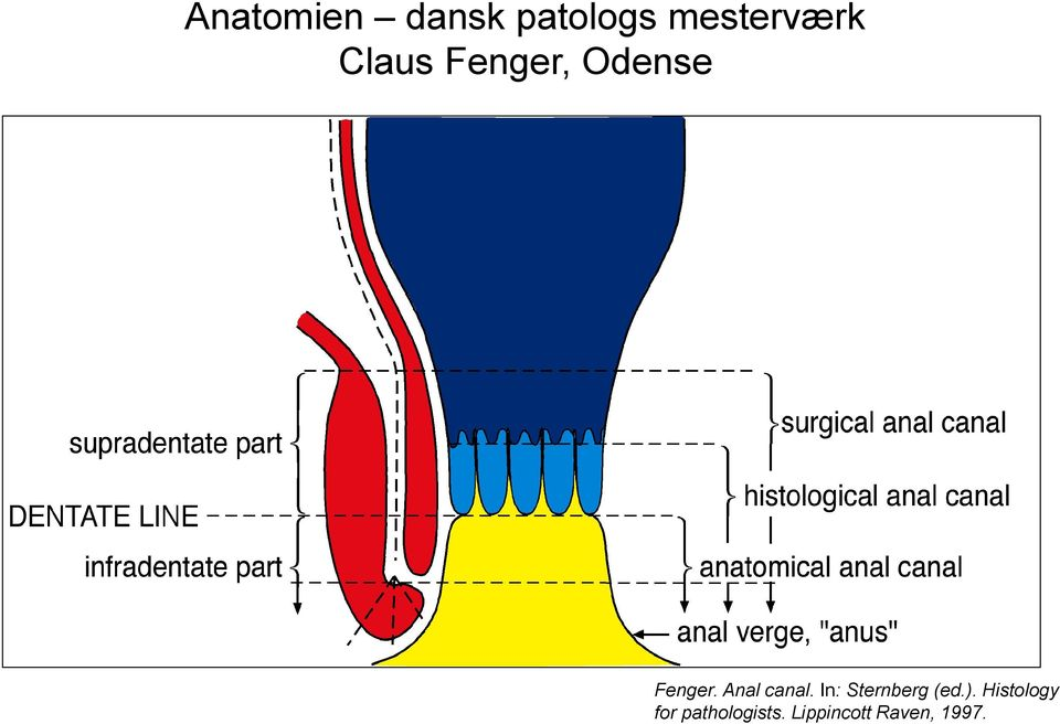 Anal canal. In: Sternberg (ed.).