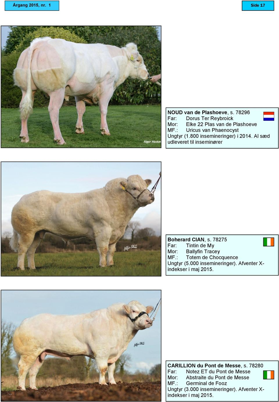 78275 Tintin de My Ballyfin Tracey Totem de Chocquence Ungtyr (5.000 insemineringer). Afventer X- indekser i maj 2015.