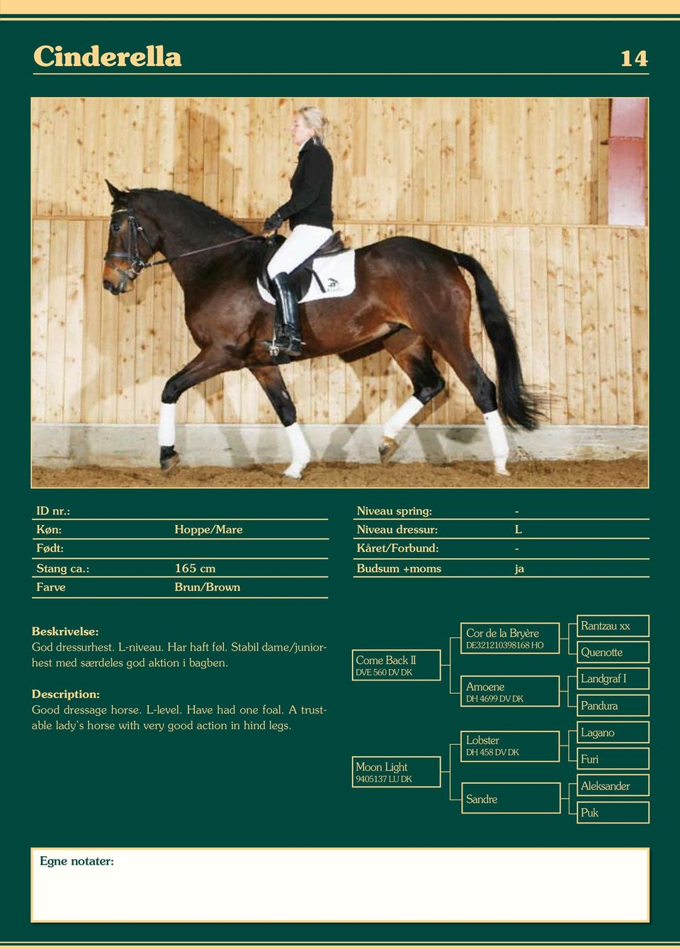 Good dressage horse. L-level. Have had one foal. A trustable lady s horse with very good action in hind legs.