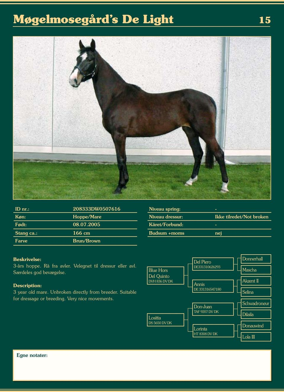 Unbroken directly from breeder. Suitable for dressage or breeding. Very nice movements.