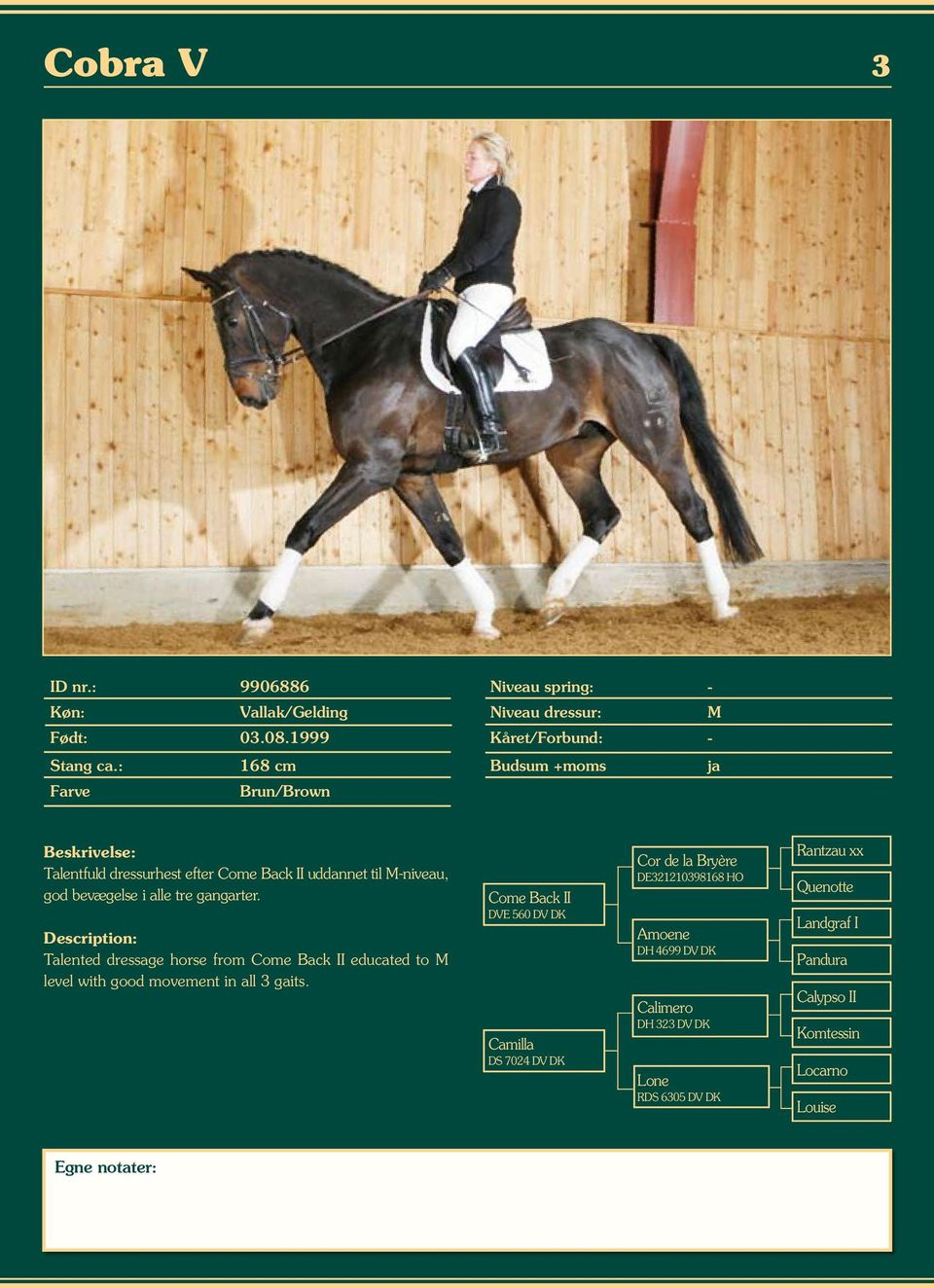 Talented dressage horse from Come Back II educated to M level with good movement in all 3 gaits.