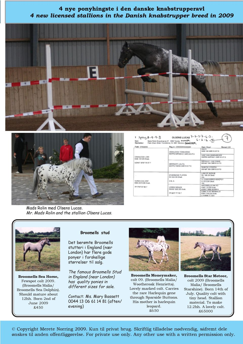 (Broomells Malia/ Broomells Sea Dolphin). Should mature about 12hh. Born 2nd of June 2009 450 The famous Broomells Stud in England (near London) has quality ponies in different sizes for sale.