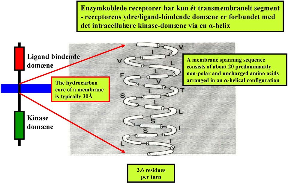 core of a membrane is typically 30Å A membrane spanning sequence consists of about 20 predominantly