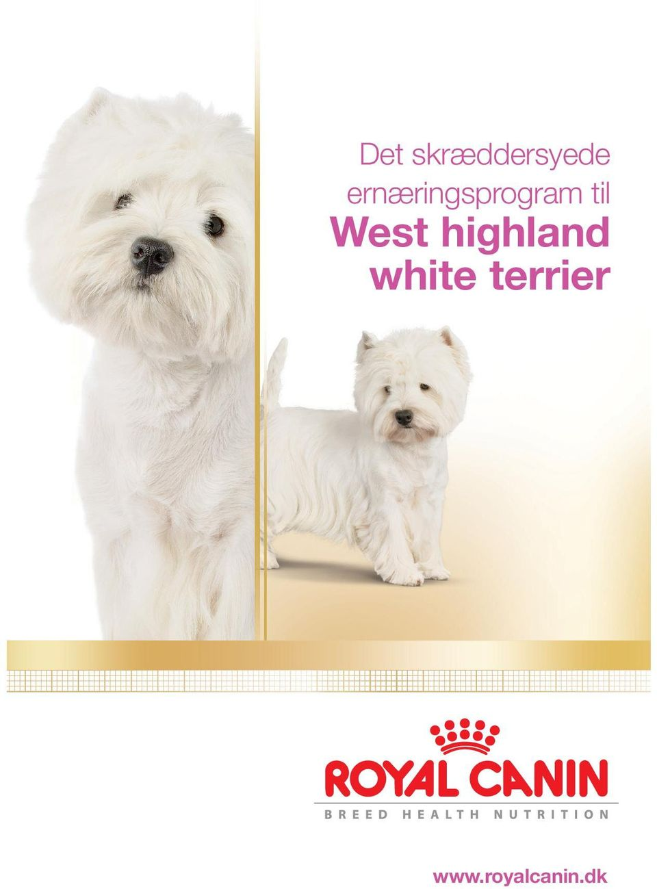 West highland white