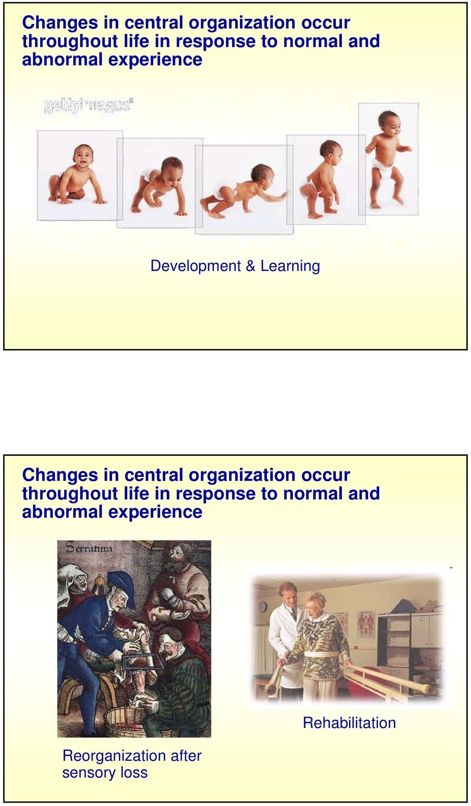 and abnormal experience Reorganization after sensory loss