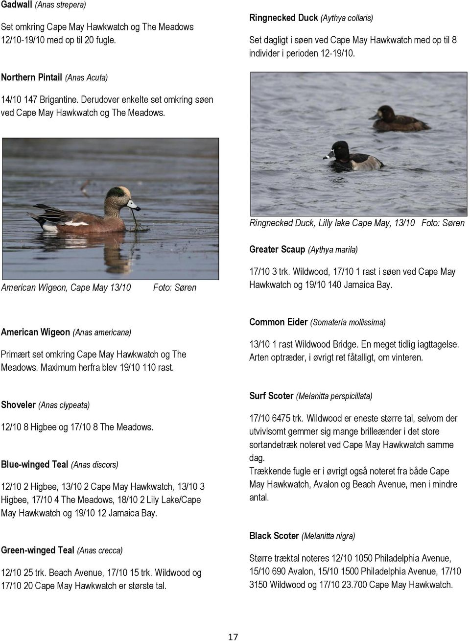 Derudover enkelte set omkring søen ved Cape May Hawkwatch og The Meadows. Ringnecked Duck, Lilly lake Cape May, 13/10 American Wigeon, Cape May 13/10 Greater Scaup (Aythya marila) 17/10 3 trk.