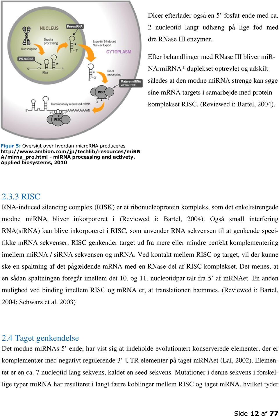 (Reviewed i: Bartel, 2004). Figur 5: Oversigt over hvordan microrna produceres http://www.ambion.com/jp/techlib/resources/mirn A/mirna_pro.html - mirna processing and activety.