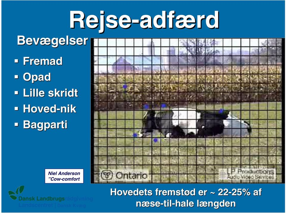 Niel Anderson Cow-comfort Hovedets