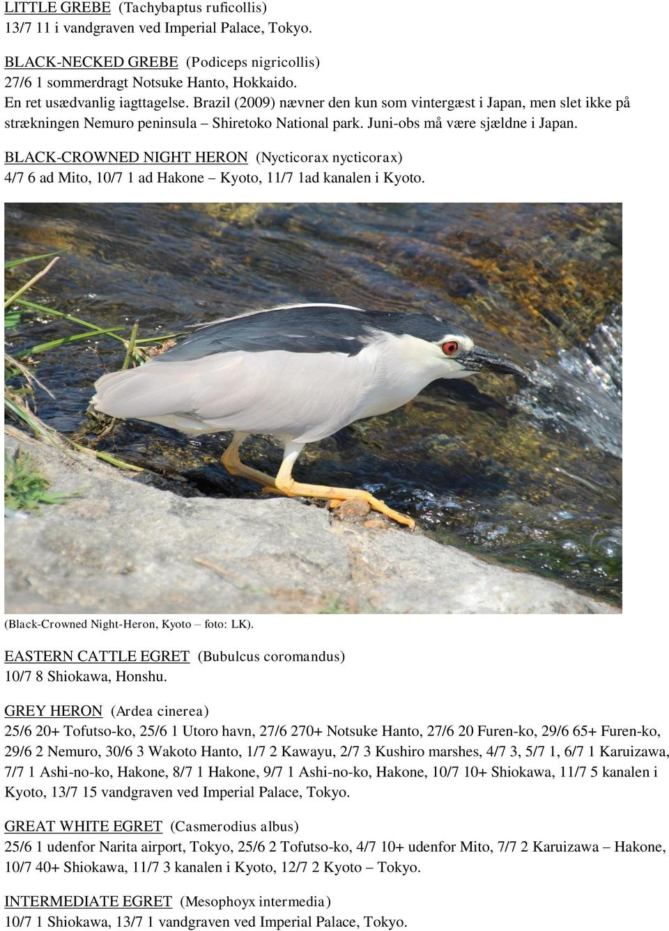 BLACK-CROWNED NIGHT HERON (Nycticorax nycticorax) 4/7 6 ad Mito, 10/7 1 ad Hakone Kyoto, 11/7 1ad kanalen i Kyoto. (Black-Crowned Night-Heron, Kyoto foto: LK).