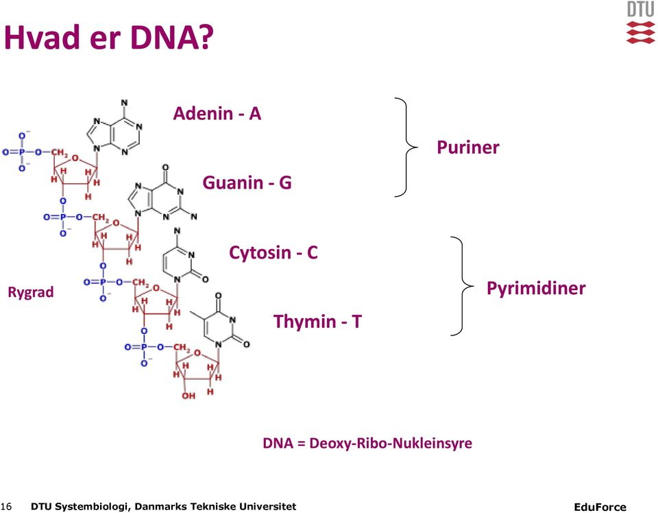 Cytosin - C Thymin - T Pyrimidiner DNA =