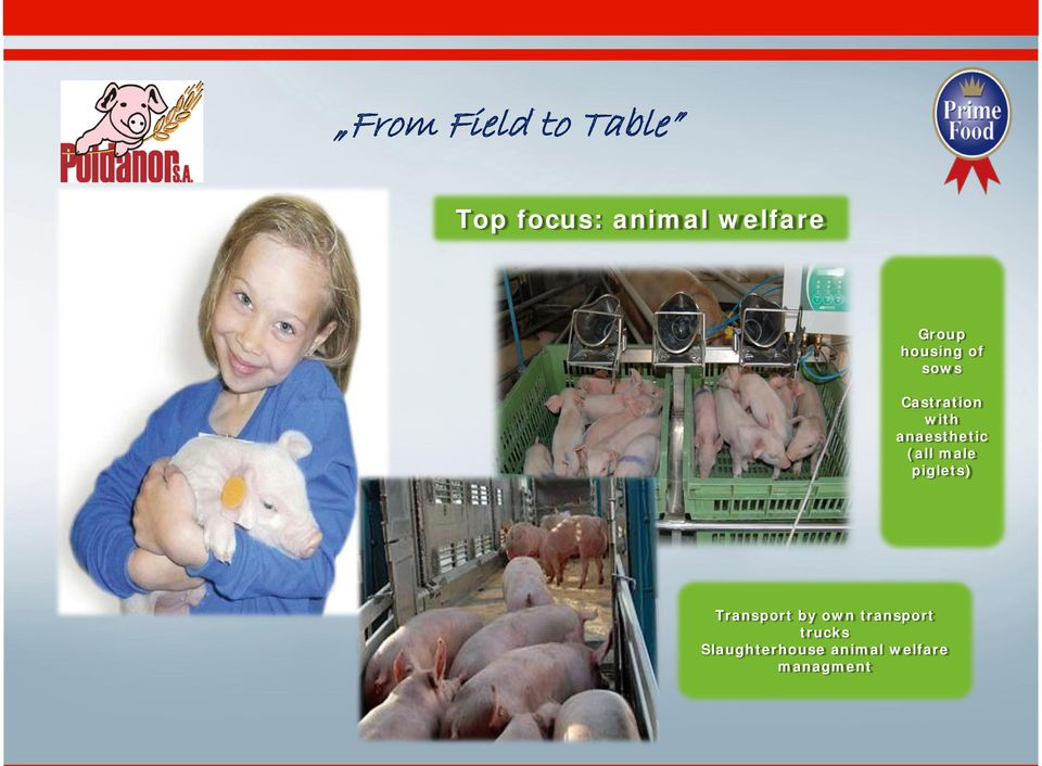 anaesthetic (all male piglets) Transport by own