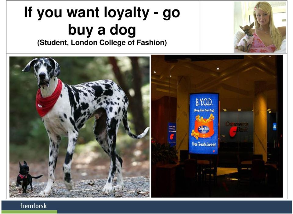 a dog (Student,