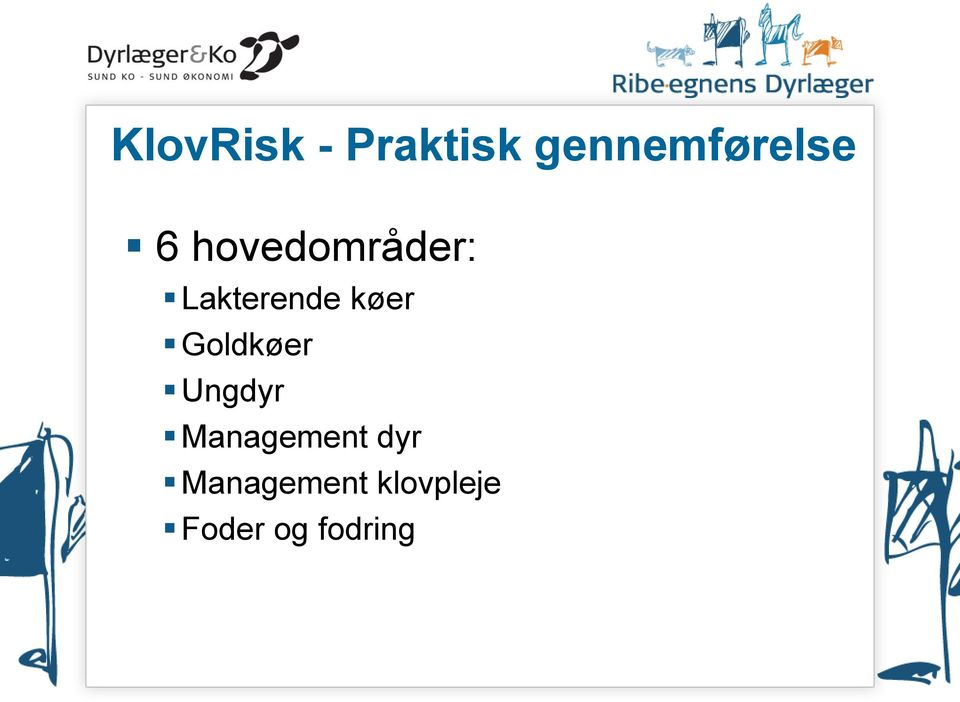 Goldkøer Ungdyr Management dyr