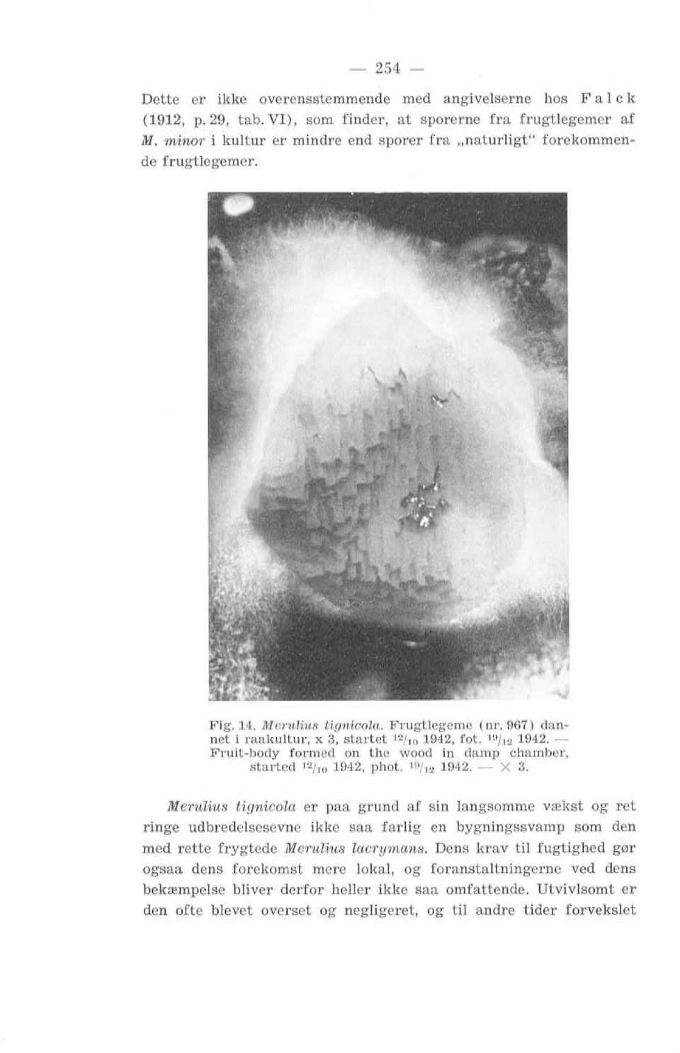 Fruit-body formed on the wood in damp chamber, start ed 12 / 10 1942, phot. 19 1t2 1942. - X 3.