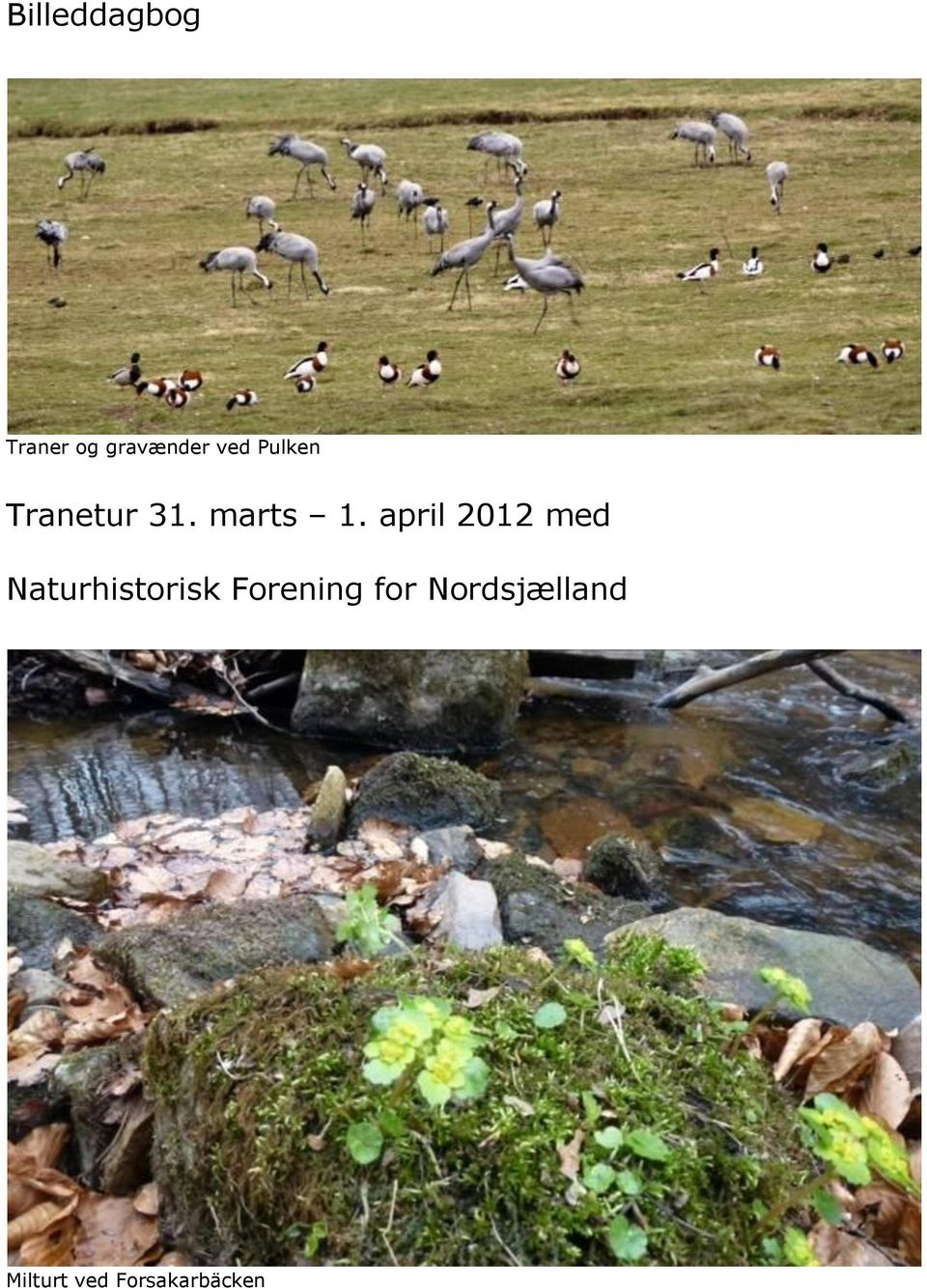 april 2012 med Naturhistorisk